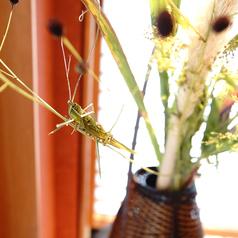 季節に合わせて四季折々の花が店内を彩ります。