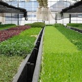 埼玉県三郷市の契約農場の野菜をご提供