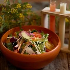 神戸野菜の彩り野菜のサラダ