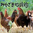 宮崎県串間から冷凍無しで直送されるため、鮮度抜群です。肉はやわらかく、ジューシーかつ美味&ヘルシーで女性にも人気です。地頭鶏からとった出汁はコラーゲンたっぷりで美容にもよく、濃厚です。