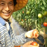 羽田農園からの無農薬野菜
