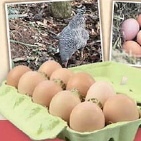 店内の卵は『五頭山麓ひろころ鶏園』のものを使用。