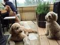 ペットOKのテラス席は、愛犬家の集いの場