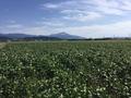 料理メニュー写真滋賀県 大豆畑