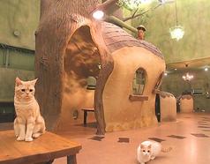 Cat Cafe てまりのおうちの写真