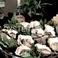 全国各地の名産地から直送!新鮮素材!生牡蠣だけでも常時6種ほど取り揃えております◎