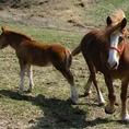 ≪日本一の馬肉≫熊本・阿蘇の千興ファーム産の馬肉 日本で唯一となる飼育から精肉まで一貫して徹底管理された生肉生産ラインを持つため、国内屈指の鮮度を誇る。だから、「にく久」は馬刺が抜群に美味しい!