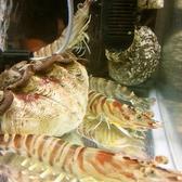 新鮮な魚介を堪能いただけます。