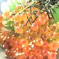 料理メニュー写真小樽漁師飯 はらこ飯