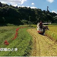 山からの湧き水だけを利用した自然水で作った『お米』