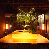 大きな盆栽を囲んだお洒落なカウンター席。
