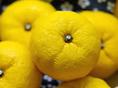 【柚子酢】柚子胡椒と同じく西米良で栽培された柚子を絞りました。無添加柚子果汁100%はレモンの変わりに、お料理や焼酎に入れるなど色々なお召上がり方でご賞味下さい。