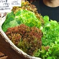 【エコ作野菜】
