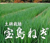 【倉橋町 宝島ねぎ】を使用。専用農場で栽培★