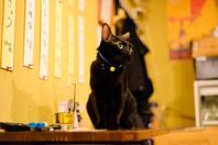 黒猫のロマオくん☆