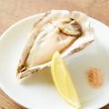 料理メニュー写真生牡蠣と塩レモン