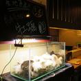 店内に足を踏み入れると、そこには新鮮な魚介類たちがたくさんいる水槽★産地直送の食材を水槽で管理することで、より鮮度高くお客様にご提供できます!