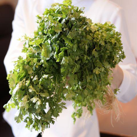 アジアンエスニック料理に欠かせないパクチー。タイやベトナムにおいては薬味として重宝されておりますが、パパイヤリーフでは定期的にパクチー料理を開発中です♪