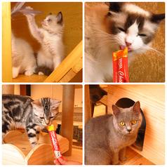 猫カフェ クラウドの特集写真