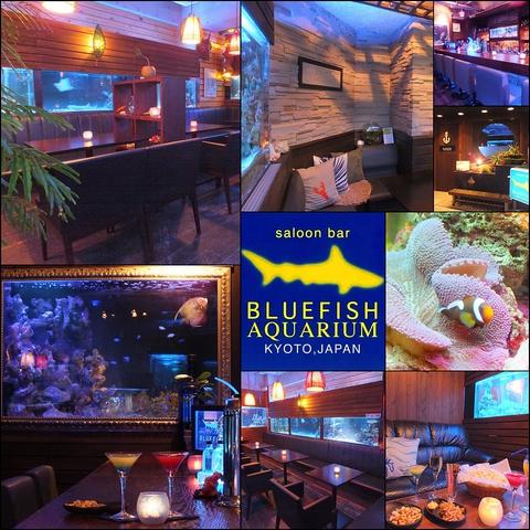 Bluefish Aquarium