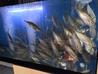 魚鮮水産 さかなや道場 塩尻広丘店のおすすめポイント3