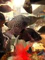 【生け簀完備!】店内には生け簀完備で新鮮な鮮魚をご提供いたします!