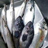 魚自慢のお店が頼りにする目利きのプロ!仲卸出身の店主が旬の中でもその日一番の魚介を毎日厳選して仕入れています♪