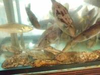 市場直送 新鮮瀬戸の地魚