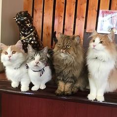 猫カフェ 楽天の写真