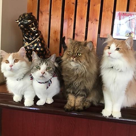 猫カフェ 楽天