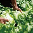 しゃぶしゃぶに合う野菜を求めて、農家さんと直接話し合って生まれた野菜。お店には毎日、熱い思いが届いています。