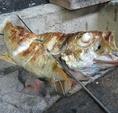 炭火でお好きな鮮魚を調理します!炭火で焼くことにより素材のおいしさが更に引き立ちます。