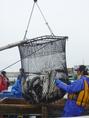 道内20か所の浜から直送の鮮魚。