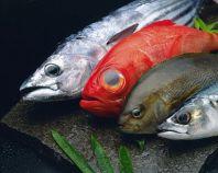 天然地物の魚をお刺身で