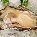 料理メニュー写真新鮮でぷりっぷりの【岩牡蠣】5月~8月末