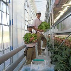 函館 七飯町から届く無農薬水耕栽培野菜