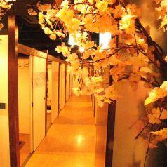 個室へご案内いたします★渋谷駅周辺で完全個室居酒屋をお探しでしたら是非、居酒屋渋谷個室の宝石箱さくらさくら渋谷店をご利用ください★