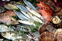 きびなご・カンパチなど鹿児島自慢の魚のイメージ写真