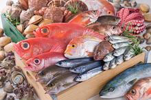 明石・瀬戸内鮮魚(穴子,鯛,たこ,その他)のイメージ写真