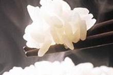 新潟コシヒカリなど一味違うお米を堪能のイメージ写真