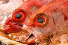 のど黒など日本海の鮮魚のイメージ写真