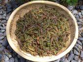 清流庭園・山菜料理 玉貴のおすすめレポート画像1