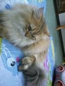 猫カフェねこまんまのおすすめレポート画像1